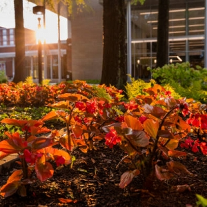 Campus scene - sunrise behind Case Dining Hall with landscaping on foreground
